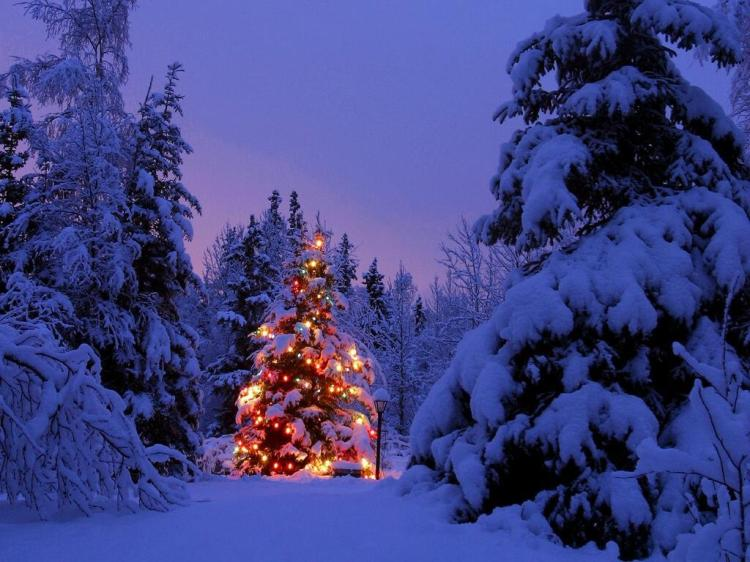 christmas-tree-outside