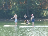 An army of paddle boarders appeared